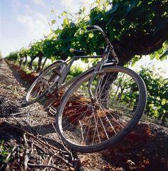 Cono Sur Bicycle