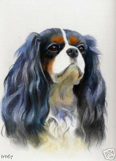 Portrait of a Tri-Coloured Cavalier King Charles Spaniel