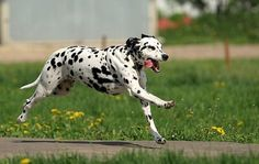Thinking About Fastest Dog Breed? It's Time To Stop!