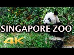 46 Things to Do in Singapore for Couples: Find the Best Romantic Ideas - Singapore Top Listing Singapore Tour Guide, Singapore Zoo, Singapore Travel, Virtual Travel, Virtual Tour, Virtual Reality, Creative Curriculum Preschool, Virtual Field Trips, Zoo Animals