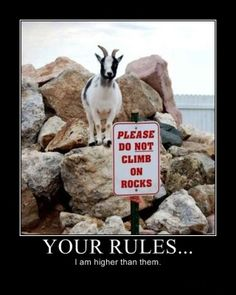 The Rebel   15 Of The Best Demotivational Posters