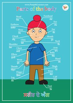 Calf Leg, Alphabet Tracing, Hand Wrist, Body Parts, Helping Others, Goal, English, Teaching, Education