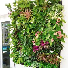 Designer Jeffrey Allis of Truvine Design. Garden Cafe, Tropical Colors, Atrium, Garden Landscaping, Garden Design, Flora, Terrariums, Landscape, Wall Ideas