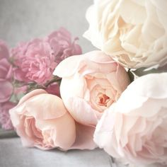 Rose Photography Romantic Pink Roses, Nature Photography, Feminine... ($30) ❤ liked on Polyvore featuring home, home decor, wall art, flower stems, flower wall art, garden wall art, flower home decor and floral home decor