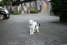 cat in temple