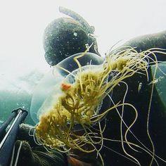 Encantos  do fundo do mar! #spearfishing #pescasubacquea  #insanespearfishing #saltlife  #ocean #speargun #aguaviva  #oceancolourscene #apnea #chassesousmarine #diver  #mergulho #mergulholivre #aguaviva