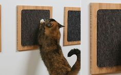 Itch Cat Scratcher. Tuck in some catnip and then maybe the cats will steer clear of the new furniture I can't purchase because of the cats....