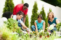 Free Vegetable Seeds for School Garden Programs