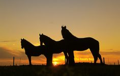 This shows shape because you can see the silhoutte of the horses clearly.