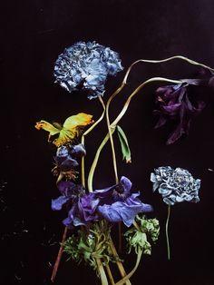 See more of andreagentl's VSCO. Dark Flowers, Flowers Nature, Sarah Moon, Royal Colors, Colour Pallette, Vsco Grid, Flower Photos, Mother Earth, Art Inspo