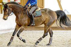 Wohlfühltraining fürs Pferd