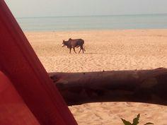 Beach Animal