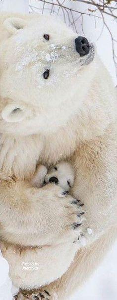 Polar bear and cub Animals And Pets, Baby Animals, Funny Animals, Cute Animals, Baby Giraffes, Wild Animals, Beautiful Creatures, Animals Beautiful, Baby Polar Bears