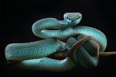 fotos de serpientes