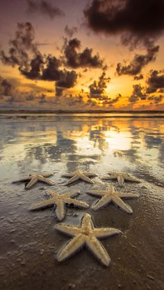 Sea stars - iPhone wallpapers @mobile9 | #landscape #scenery
