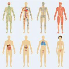 Diabetes organ damage