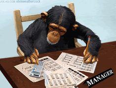 Les 97 meilleures images de Monkey | Animaux, Singe et Singes drôles