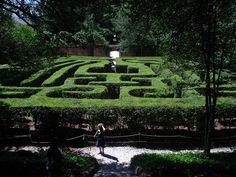 Hedge Maze, Governor's Mansion, Williamsburg, Virginia.