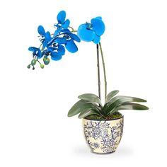 Plantas e Flores - a despeito das cores, o formato sinuoso da maioria das orquídeas remete ao Elemento Água - www.alinemendes.com.br Feng Shui, Water Element, Colors, Plants