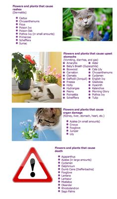 When in doubt, avoid altogether. (plants, flowers, poisonous to pets, cats, dogs, poison, list, avoid)