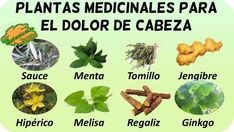 Herbs For Health, Medicinal Plants, Natural Medicine, Natural Remedies, Herbalism, Health Fitness, Home And Garden, Nature, Witch