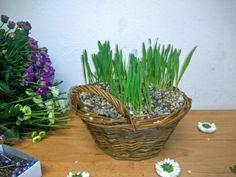 HOYA, s.o v Bratislava, Bratislavský kraj Bratislava, Planter Pots, Easter, Canning, Easter Activities, Home Canning, Conservation