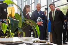 Colombian President Juan Manuel Santos (R) and Prince Charles, Prince of Wales (C) are shown a collection of natural history books by Professor Kathy Willis, Director of Science, Royal Botanic Gardens, Kew (L) at the Darwin Centre at the Natural History Museum on November 2, 2016 in London, England. The President of the Republic of Colombia Juan Manuel Santos and his wife Maria Clemencia Rodriguez de Santos are paying their first State Visit to the UK as official guests of Queen Elizabeth…