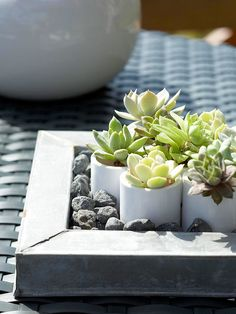 Small plant-filled vases make a charming outdoor centerpiece. See more ideas for outdoor living spaces: http://www.bhg.com/home-improvement/porch/outdoor-rooms/outdoor-room-ideas/?socsrc=bhgpin090412miniplanterscenterpiece#page=13