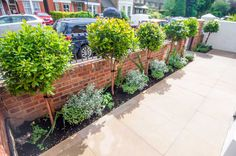 A front garden in London by Kate Eyre Garden Design, with limestone paving and arbutus.
