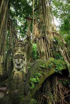 A Binyam tree drapes its roots over a bridge in the Monkey Forest Temple Complex in Bali, Indonesia (by SamCotton).