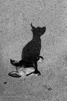 20 Light And Shadow Photography Ideas For Inspiration - Free Jupiter - 20 Light And Shadow Photography Ideas For Inspiration – Free Jupiter - Light And Shadow Photography, Reflection Photography, Cat Photography, Creative Photography, Black And White Photography, Reflection Photos, Silhouette Photography, Shadow Pictures, Tree Silhouette