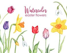 Easter Flowers, Luau Party, Daffodils, Floral Watercolor, Cardmaking, Decoupage, Clip Art, Hand Painted, Scrapbook