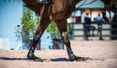A torn suspensory ligament can limit or even end your horse's athletic career, but early identification and careful treatment of these injuries can positively affect the outcome.