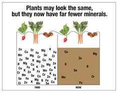 Simply Naturals Due Diligence Before I joined Simply I just had to know that there was enough supporting evidence of the facts about soil mineral depletion. I did about 10 days research and found a whole host of very informative papers, websites and blogs about this shocking modern crisis. Since then I have seen new …