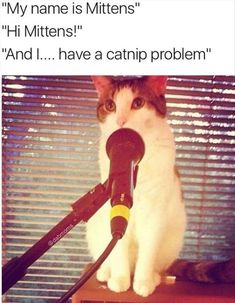 Funny Animal Pictures Of The Day - 13 Images