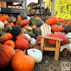 Vermont  Pic of the day 09.25.15  Photographer @ianmchale  Congratulations!   Had an awesome afternoon @shelburneorchards  #scenesofvt #shelburneVT #shelburneorchards #carsharevt @carsharevt #pickyourownapples #vermontapples 14thannual #piefest #fall #pumpkins #cider #country #vermontlife #explore #newengland