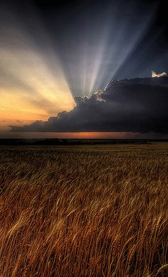 ~~Kansas | a linear severe thunderstorm with the setting sun over a wheat field | by Mr Twister Chaser~~