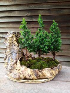 Fountain, Outdoor Decor, Plants, Home Decor, Room Decor, Water Fountains, Home Interior Design, Plant, Planting
