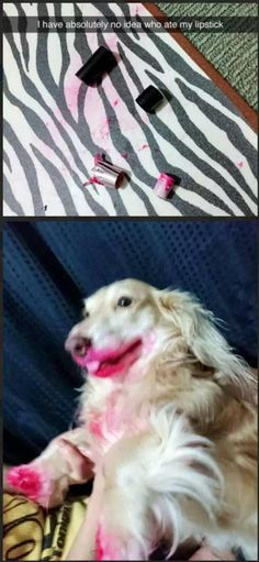 Funny Animal Pictures Of The Day – 20 Pics – Funny Dog Top