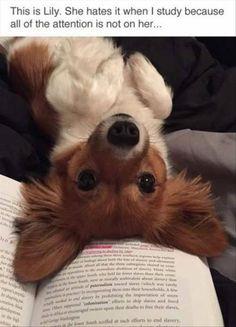 Cute upside down puppy