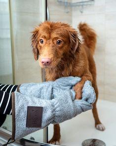 Havanese Grooming, Cat Grooming, Goldendoodle, Yorkie, Wedding Personal Touches, Pet Allergies, Essense Of Australia, Groom And Groomsmen, Dog Owners