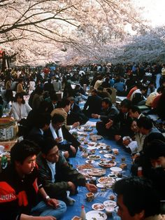 A Hanami (Cherry Blossom Viewing) party in Ueno Park in Tokyo, Japan