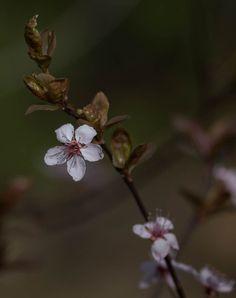 Fresh on the bloom...Worcester, MA #EastDouglasPhoto #flowers #spring  #igNewEngland #igersNewEngland #ScenesofMA #ScenesofNewEngland #igersMass #igMassachusetts #vip_world_photo #nature_perfection #landscape_captures  #igSouthofBoston #igCapeCod #NaturalNewEngland #NaturalMassachusetts #fotofanatics_flowers