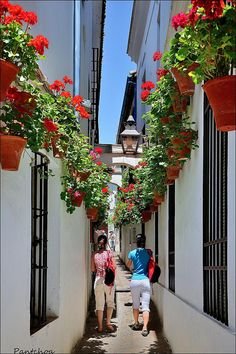 ♥...Spain. . . . I have a love affair with red geraniums, no matter where they are