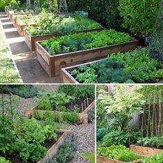 Zeleninové polykultury – tipy a inspirace | Vysněná zahrada Garden Projects, Garden Ideas, Vegetable Garden, Farmer, Homesteading, Environment, Home And Garden, Backyard, Landscape