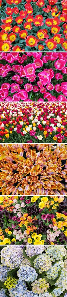 This is a vibrant collection of high resolutions photos of colorful flowers, perfect to use as backgrounds, in presentations...
