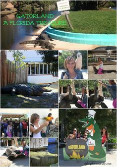 Gatorland - A Must See Florida Attraction