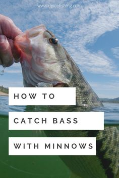 This article will provide helpful information on how to fish with minnows for bass, so keep reading! Bass fishing with live bait is the best bait for bass fishing. Using the best Live Bait for Bass Fishing and Fishing with Live Minnows will help you to catch more fish. in this bass fishing lure guide, you'll learn Bass fishing bait tips, best bass fishing lures bait, Bass fishing tips and tricks, and Bass fishing techniques for Best results using live bait. Bass Fishing Bait, Trout Fishing Tips, Bass Fishing Tips, Fishing Knots, Best Fishing, Kayak Fishing, Best Bass Bait, Inflatable Fishing Kayak, Fishing Gifts For Dad