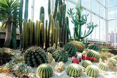 Garden and Tools: Cactus Landscape - Guide to Landscaping with Cacti by Jiraiya Morgan