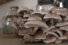 Shiitake is one of the most well-known mushrooms, due to its umami properties and meaty texture. Grow Your Own Mushrooms, The Expanse, Sprouts, Stuffed Mushrooms, Plates, Culture, Money, How To Make, Stuff Mushrooms